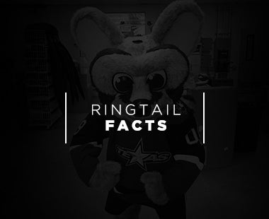 RingtailFacts.jpg
